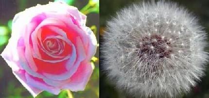 savia y semilla